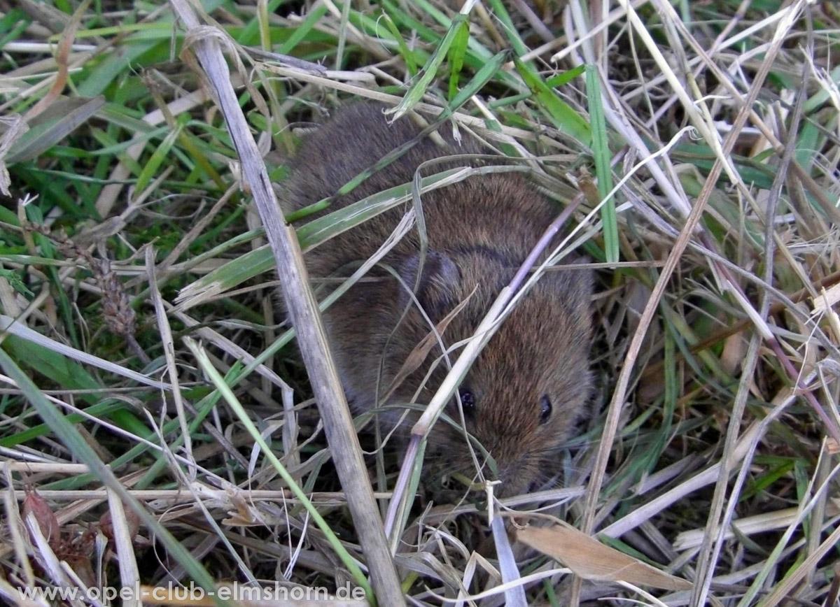 Boltenhagen-2010-0005-Maus