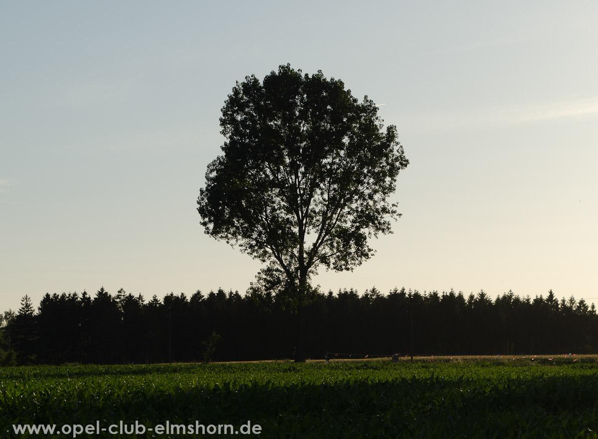 Hasenmoor-2013-0022-Die-Sonne-verschwindet-hinter-den-Baeumen