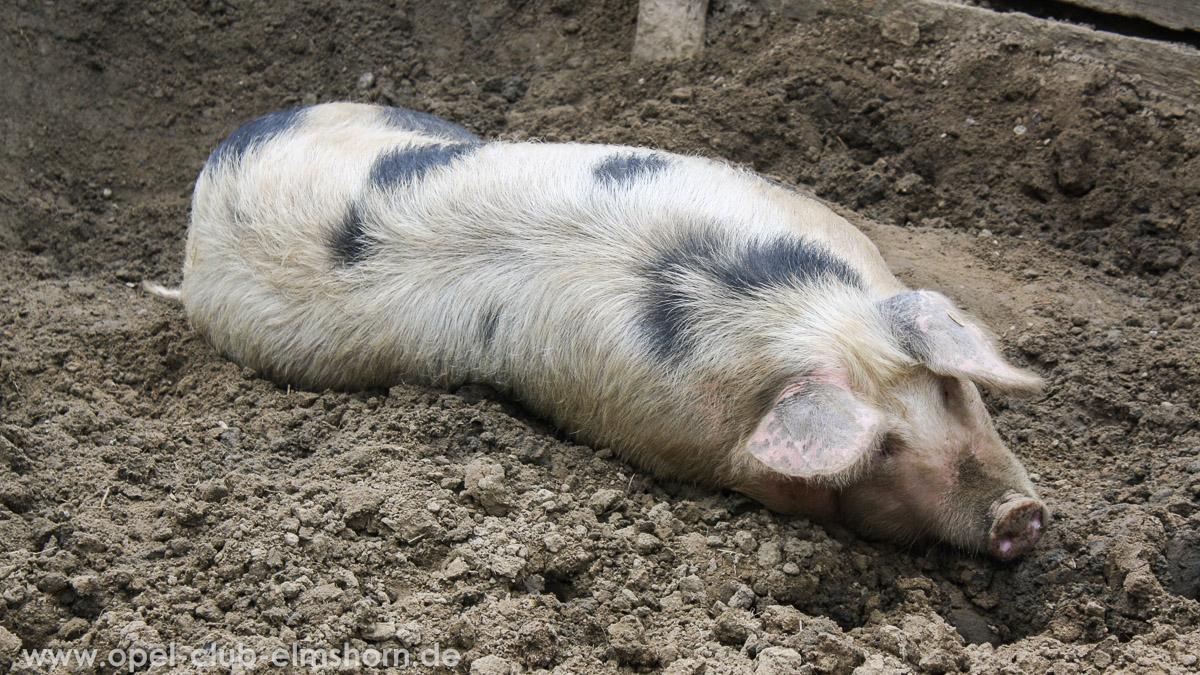 Rosengarten-2014-0013-Schwein
