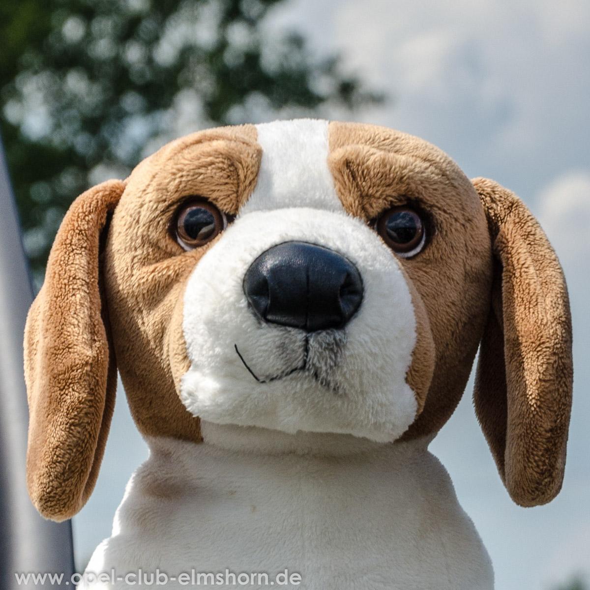 Hasenmoor-2014-0026-Plueschhund