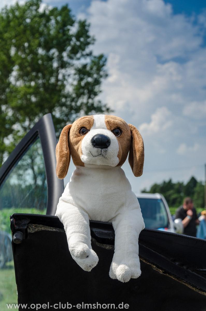 Hasenmoor-2014-0027-Plueschhund