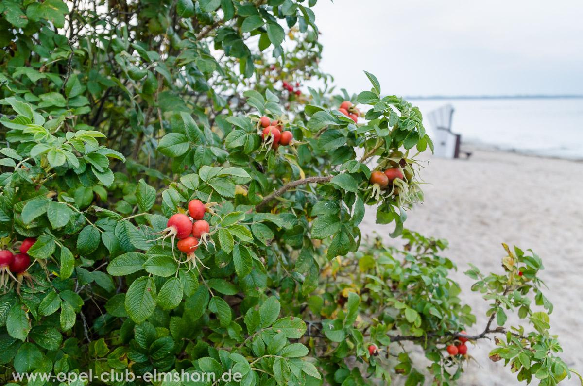 Boltenhagen-2014-0354-Hagebutten-am-Strand